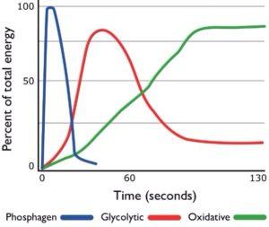 Нужны ли нам в киокушине аэробные мышечные волокна