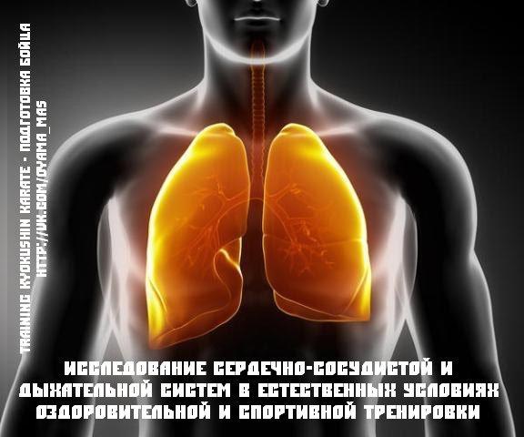 Исследование сердечно-сосудистой и дыхательной систем в естественных условиях оздоровительной и спортивной тренировки. Подготовка бойца