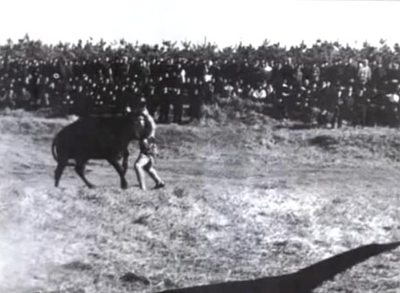 Бои Масутацу Оямы с быками
