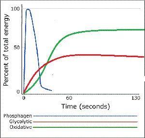 График, показывающий, в какой пропорции использовались энергетические системы, мог бы теперь выглядеть примерно так