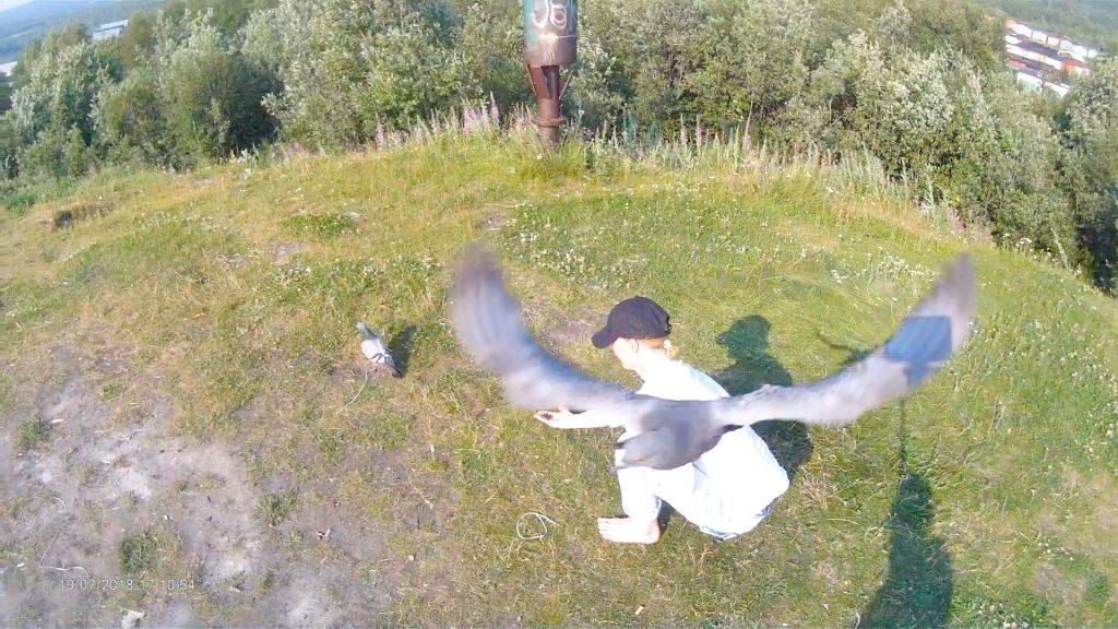 Не зря к нам когда мы тренируемся голуби прилетают и у школы, и сегодня на горе